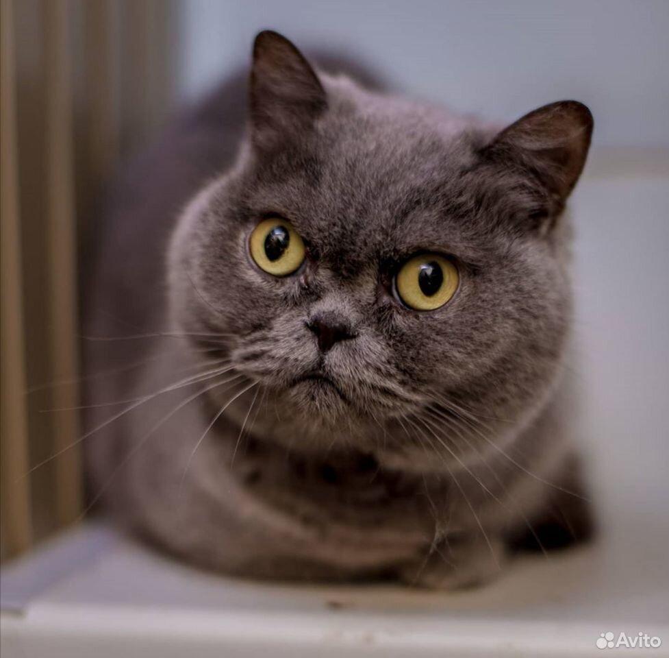 Кошечка Чудо